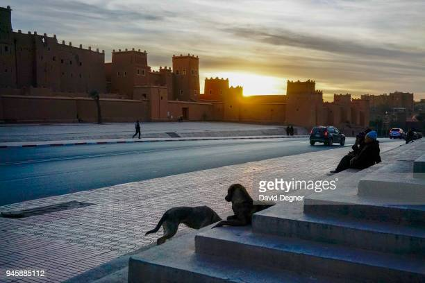 Dogs sit in front of the Taourirt Kasbah of Ouarzazate, Morocco. The Casba was used as a backdrop for hollywood films including Sheltering Sky,...
