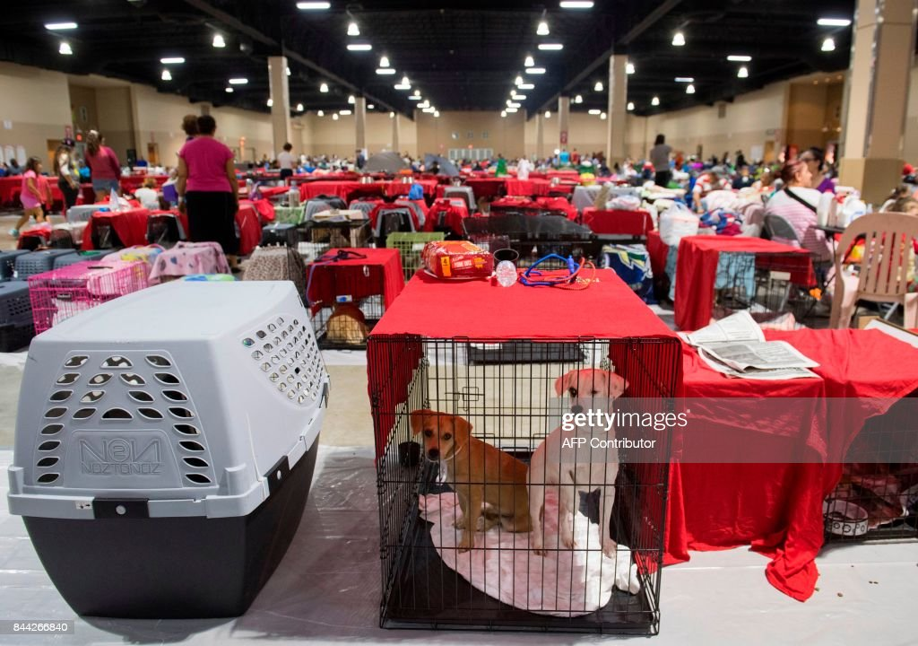 Dogs sit inside their cages as hundreds of people gather in a pet-friendly emergency shelter at the Miami-Dade County Fair Expo Center in Miami, Florida, September 8, 2017, ahead of Hurricane Irma. Florida Governor Rick Scott warned that all of the state's 20 million inhabitants should be prepared to evacuate as Hurricane Irma bears down for a direct hit on the southern US state. /