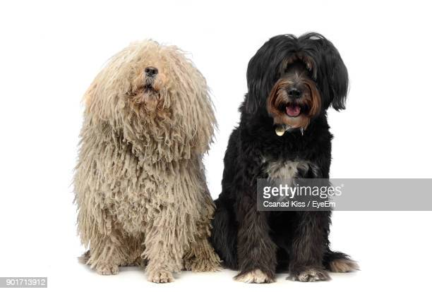 Dogs Sitting Against White Background