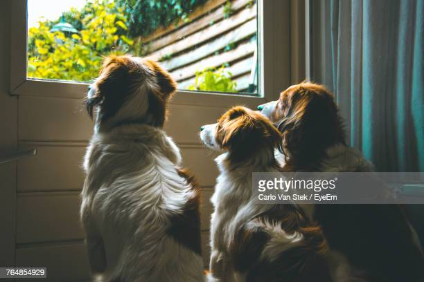 Dogs Sitting At Home