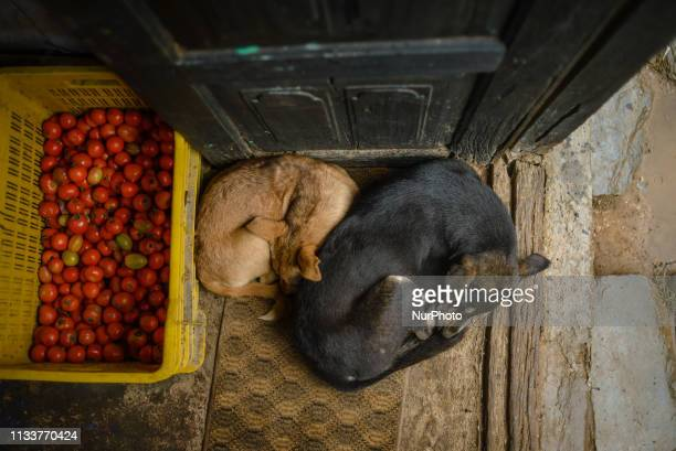 Dogs sleep in the grocery store in Bandipur Nepal on March 30 2019