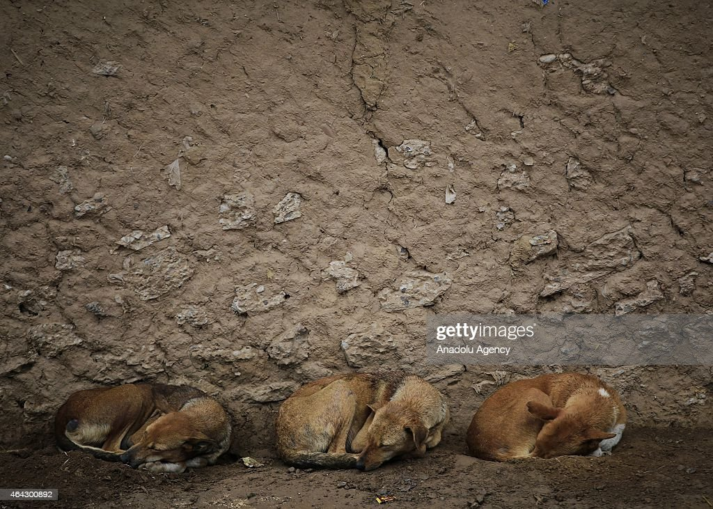 Dogs sleep under the eaves of a house at an Afghan refugee village during rainfall in Islamabad, Pakistan on February 24, 2015.