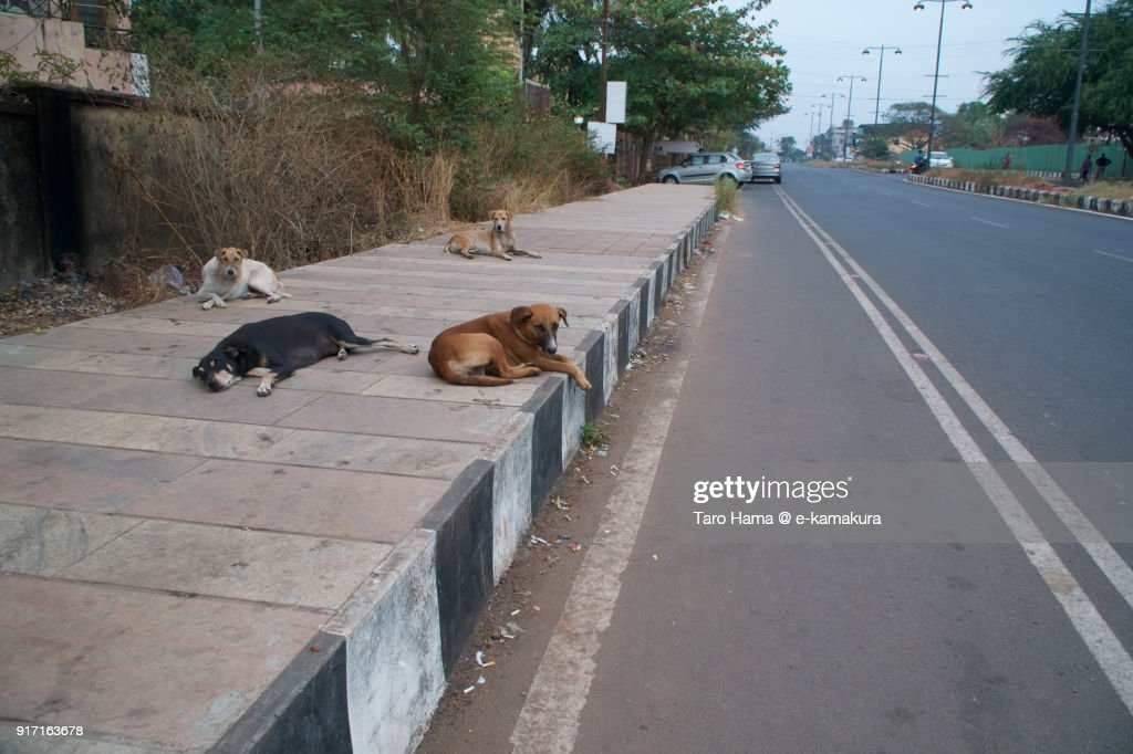 4 dogs sleeping or watching on the road in Dona Paula in Goa in India : ストックフォト