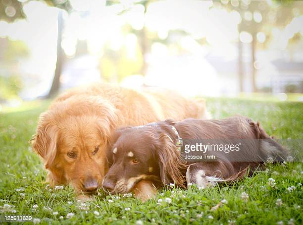 Dogs snuggling outside being cute