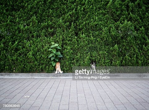 Dogs Standing In Trees