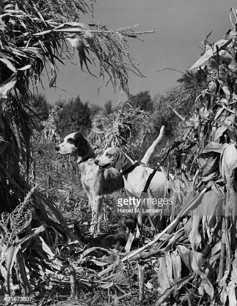 dogs standing on grassy field - mamífero con garras fotografías e imágenes de stock