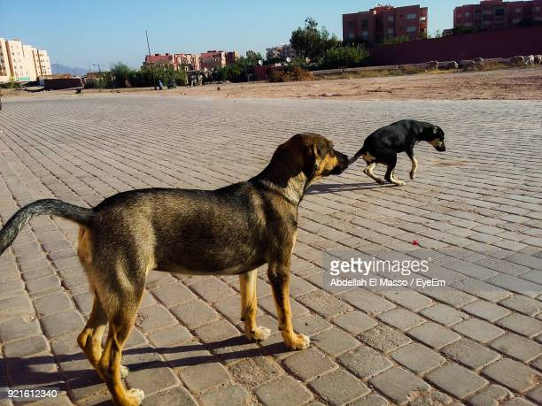 Dogs Standing On Street In City