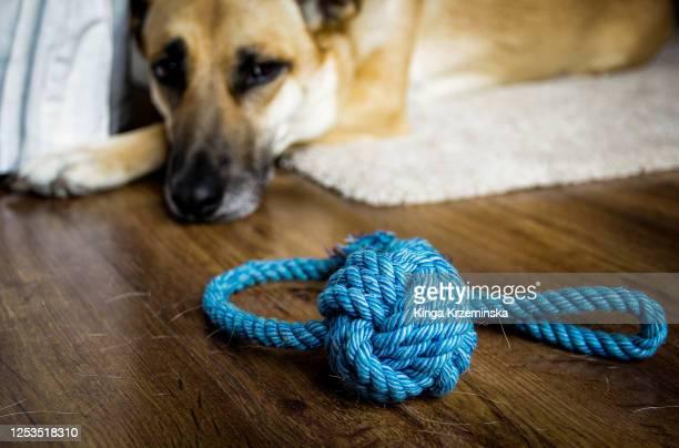 dog's toy - イヌのおもちゃ ストックフォトと画像