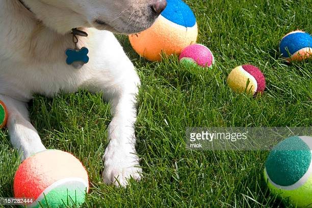 dog's toys - hairy balls stock photos and pictures