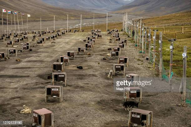 Dogs used for commercial dog sledding rest on Svalbard archipelago on August 26 2020 near Longyearbyen Norway In winter the dogs pull the sled across...