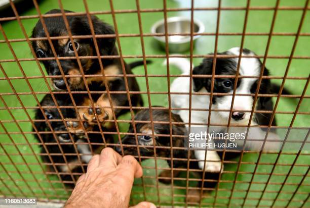 2 633 Dog Cage Photos And Premium High Res Pictures Getty Images