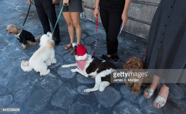 a woman and her dog audition for directors for Handa Opera on Sydney Harbour La Boheme on April 8 2018 in Sydney Australia The competition amongst...