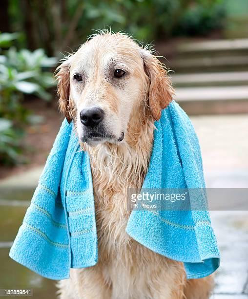 Dogs Washing Day