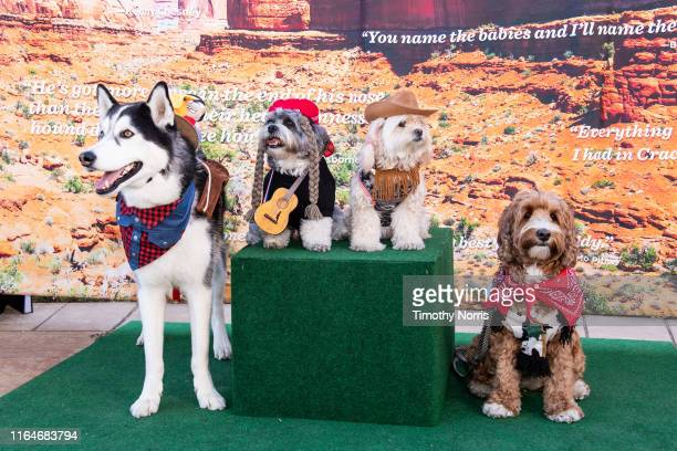 Dogs wearing western wear attend a Special Sneak Peek of Ken Burns' PBS documentary series Country Music at Autry Museum of the American West on July...
