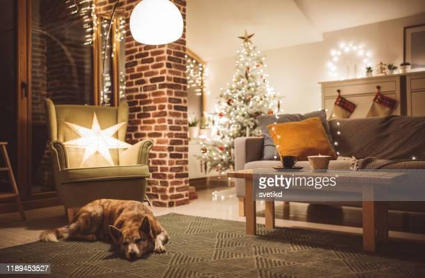 hunde wintertag - gemütlich stock-fotos und bilder