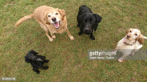 Dogs With Puppy On Grass