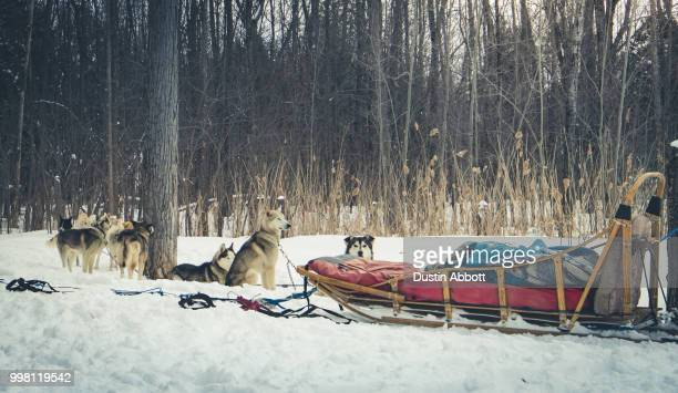 Dogsledding at the Chateau