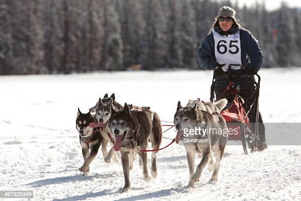 Hundeschlittenfahren in den USA Pacific Coast Championships