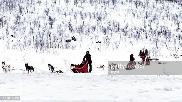 Hundeschlittenfahren in Norwegen