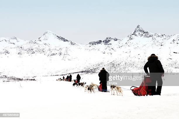dogsledding in norway - dog sledding stock photos and pictures