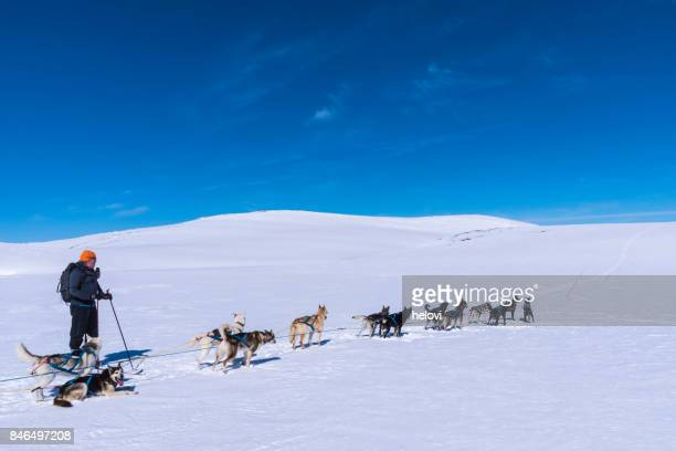 Dogsledding in Norway