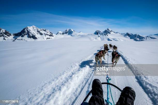 dogsledding on a mountain peak. - dog sledding stock photos and pictures