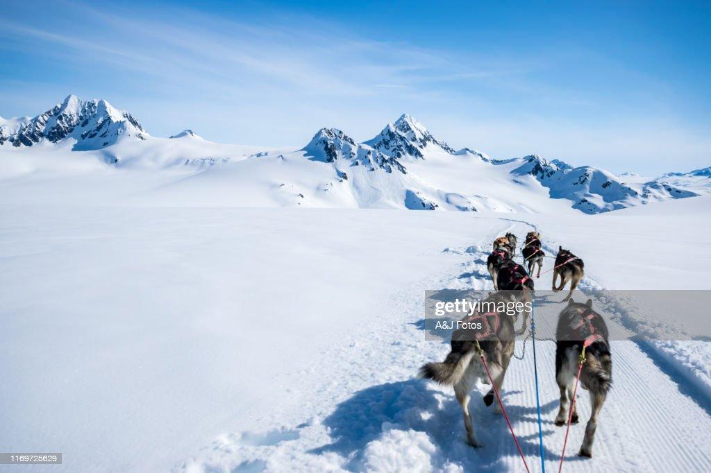 山頂で犬を飼う。 : ストックフォト