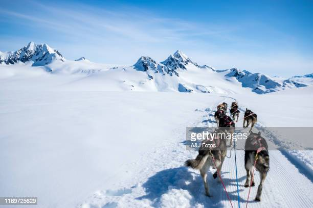 dogsledding on a mountain peak. - summit stock pictures, royalty-free photos & images