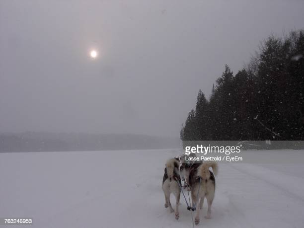 Dogsledding On Snowy Field Against Sky During Winter