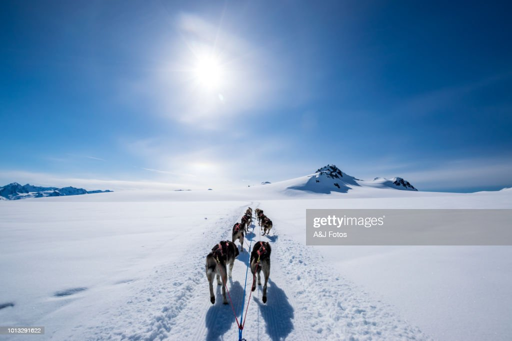 Dogsledding on the mountain : Stock Photo