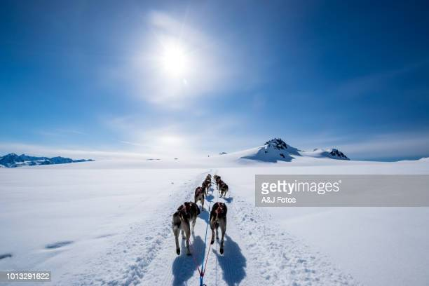 Dogsledding on the mountain