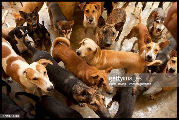 dogs'r us - large group of animals stock pictures, royalty-free photos & images