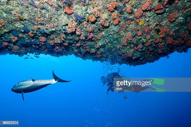 Dogtooth Tuna and Diver outside Cave at Outer Reef, Maldives