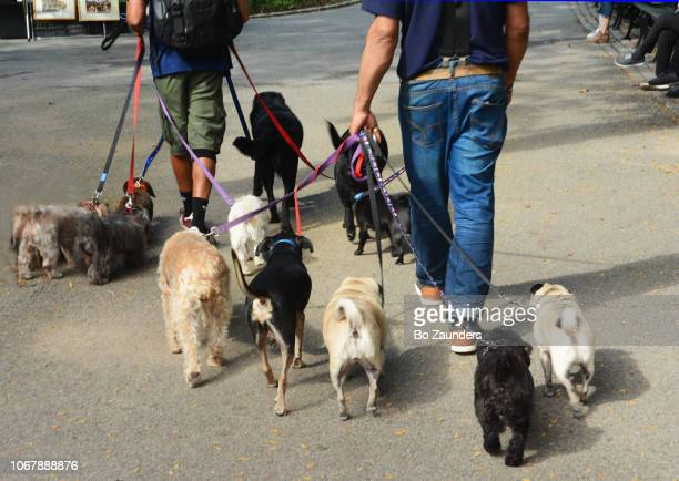 Dogwalkers in Manhattan
