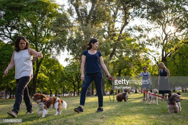 dog-walkers walking around a public park - off leash dog park stock pictures, royalty-free photos & images