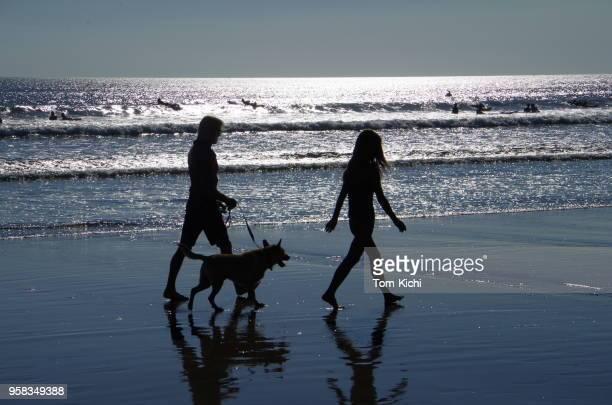 Dog-walking on the beach