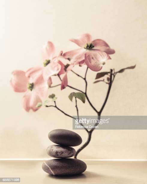 dogwood and pebbles - dogwood blossom stock pictures, royalty-free photos & images