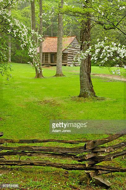 dogwood trees and tipton place - cades cove stock pictures, royalty-free photos & images