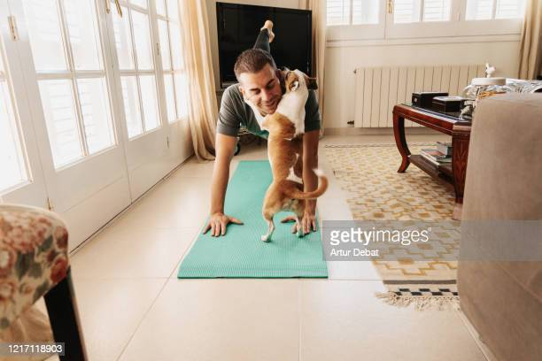 doing exercise at home with dog during coronavirus quarantine. covid-19. - wellness stock pictures, royalty-free photos & images