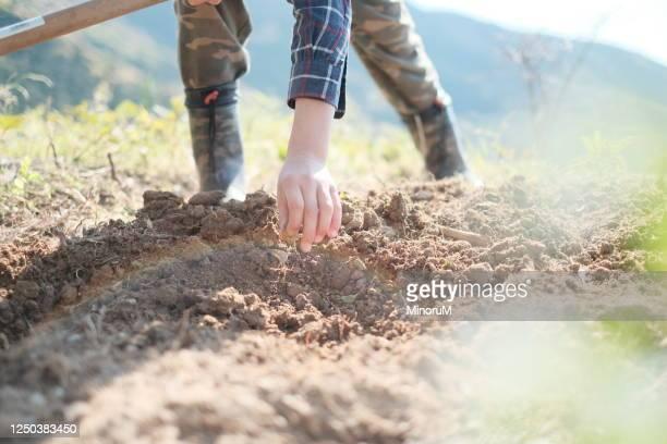 doing farm work - 栽培する ストックフォトと画像