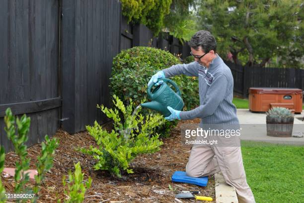 covid-19 doing things at home gardening man with gloves waters bush ms right - mulch stock pictures, royalty-free photos & images