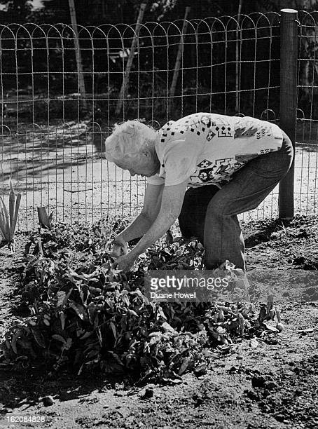 Do it yourself senior inspects potato crop stock photos and pictures sep 29 1976 sep 31 1976 oct 2 1976 doityourself senior inspects potato crop don solutioingenieria Gallery