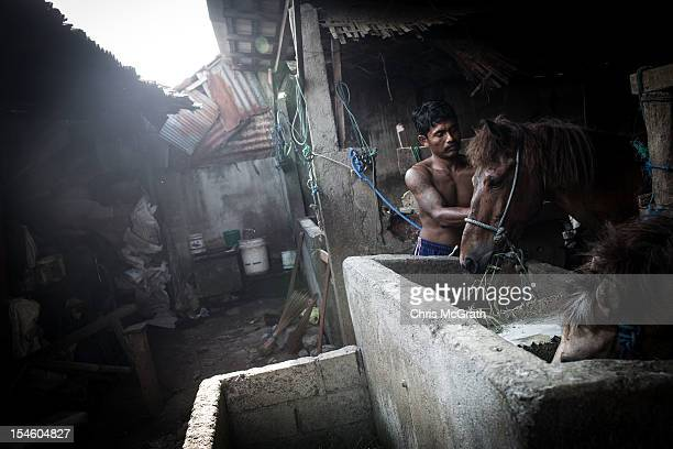 Dokar driver Made Puja tends to his horse after a days work on October 14 2012 in Denpasar Bali Indonesia The Dokar is traditional local transport...