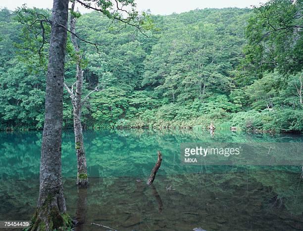 dokkonuma in zao, yamagata prefecture, japan - 山形県 ストックフォトと画像