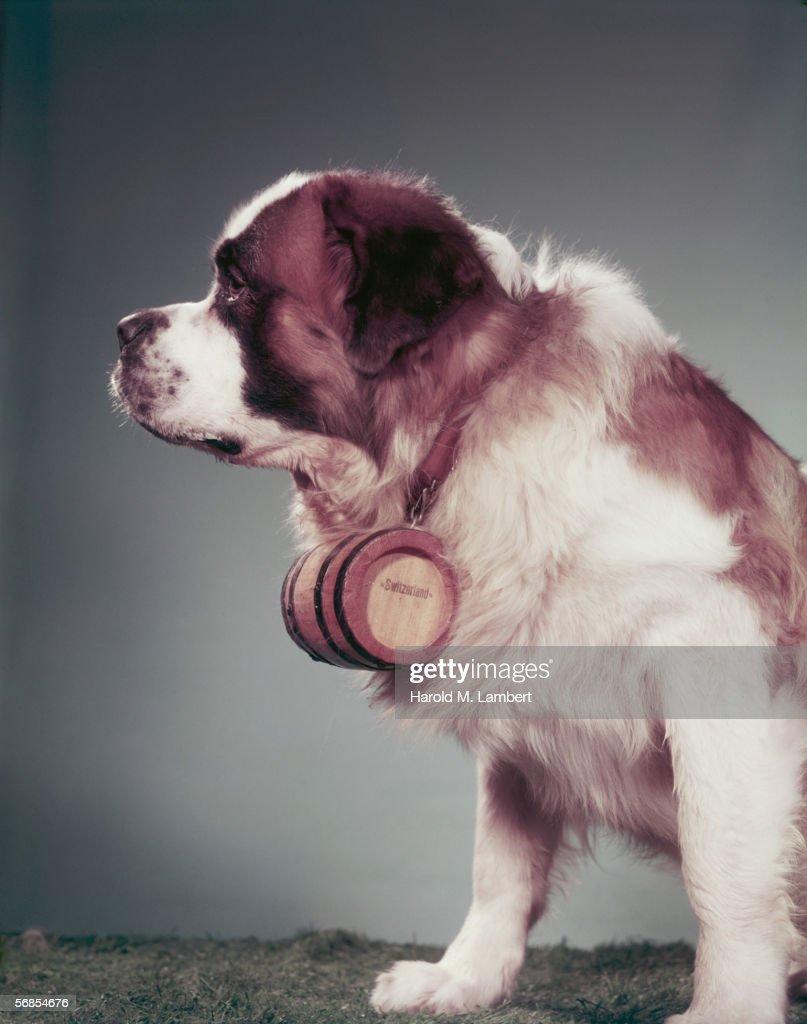 Doleful Dog : Stock Photo