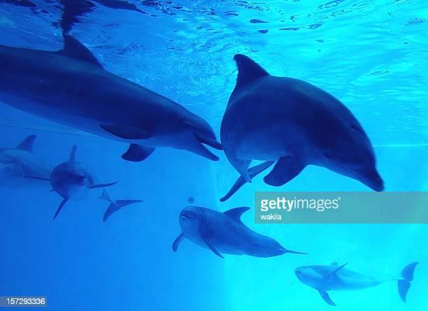 Dolfins -Delfinschule