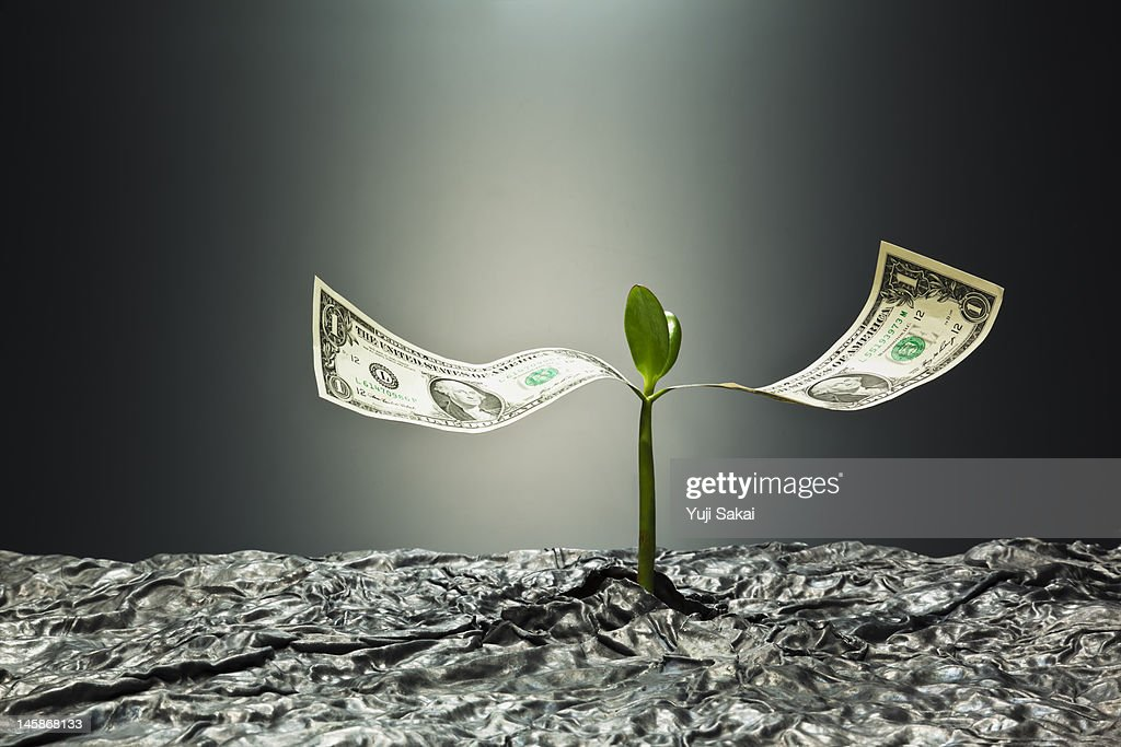 US dollar banknote  on sprout : Stock Photo