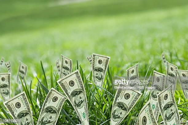 100 dollar bills growing in grass