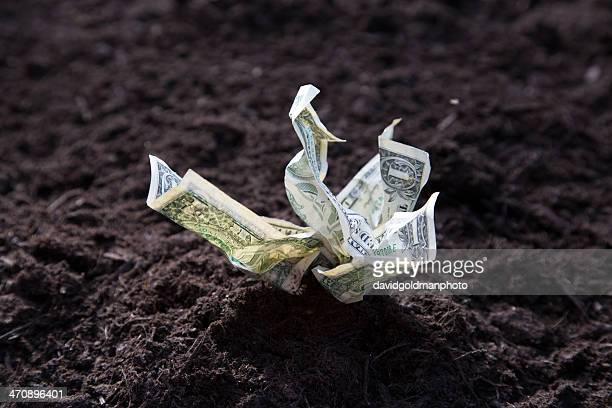 dollar bills growing out of soil - chatham new york state stock pictures, royalty-free photos & images