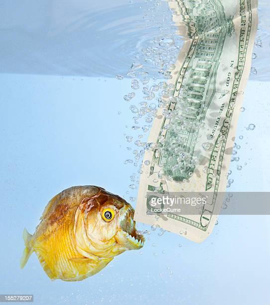 dollar de crise - piranha photos et images de collection